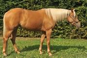 Pferdeverkauf leicht gemacht!