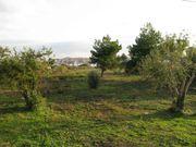 BLICK ZUM MEER.jpg - Adria-Dalmatien