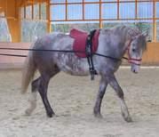 Hippologische Akademie 2007 - 2008 112 -1.JPG - Pferdetrainerin bietet Hilfe an