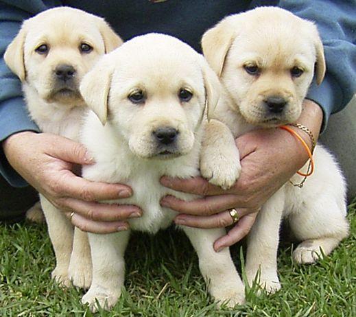 puppy22222222222222222222222222.jpg