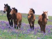 field-flower-horses.jpg
