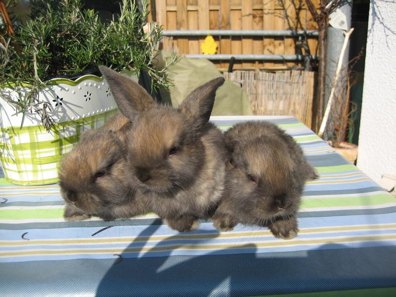 Kaninchen-Internetbilder 020.jpg