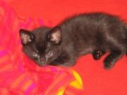 Katzenkinder 01.08.07 076.jpg