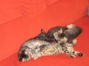 Katzenkinder 01.08.07 077.jpg