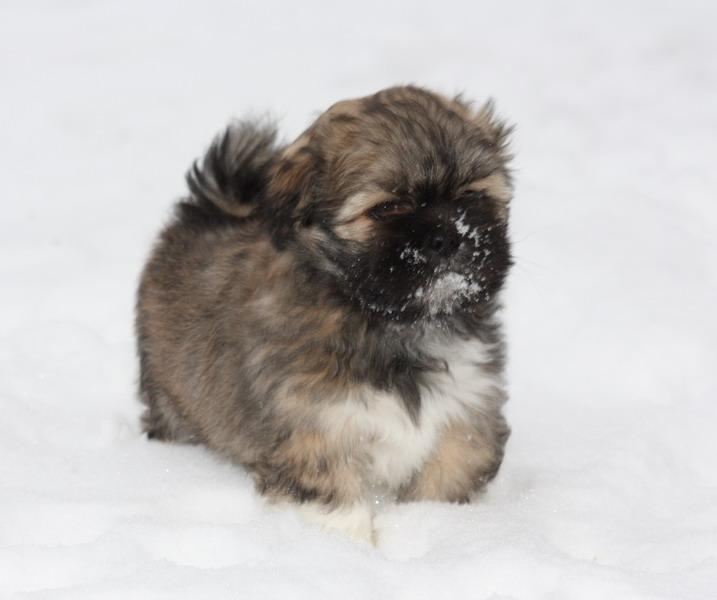 Nandi im Schnee.jpg