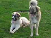 Barney & Hannes.JPG