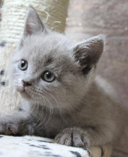 Katzen 1.jpg