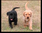 puppy333333333333333333.jpg