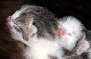 Katzenbabys Fotos