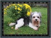 Hundepflege allround auch Hausbesuche möglich