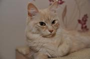 DSC_0078.JPG - 3 wunderschöne Maine Coon Katzen abzugeben