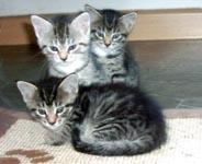 Katzenbabys kostenlos abzugeben Start