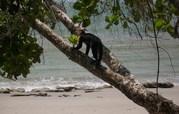 costa rica 1 123.JPG - gefuehrte Touren durch Costa rica