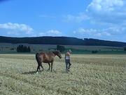 Beziehungstraining zwischen Pferd und Mensch