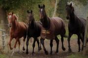 Freie Pferdeboxen - Paddock und Fensterboxen
