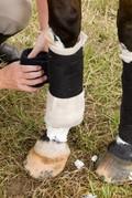 Informationen zur Pferde Operationskostenversicherung