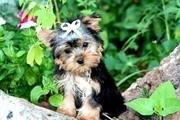 Achtung!!! Hunde aus Kamerun!!!