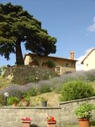 Toskane von Florenz Ferienhaus mit Pool 4 Wohnungen
