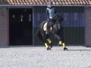 Super Dressur / alle runder Friesen Wallach Pferd