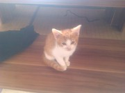 noch 1 katze abzugeben 10 wochen alt