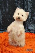 Hundepflegesalon, Fotostudio, Hundewaschstation