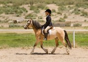 Informationen zur Ponyhaftpflichtversicherung