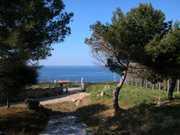 Vista mare sotto i pini.JPG - Urlaub/Ferienwohnung in Kalabrien