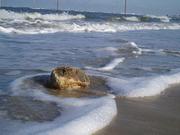 Nordseewochen.de Urlaub in Hooksiel an der Nordsee