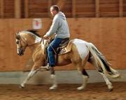 Paint Horse Deckhengst-dsc5625_150.jpg