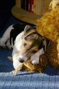 Informationen zur Kombi Hundeversicherung