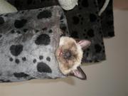 P2120116 (Small).JPG - Tierarzthelferin bietet liebevolles Tiersitting an
