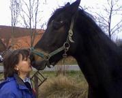 Das Tor zum Pferd-Bild für Fleyer.jpg