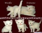2 weiße Catsan Kitten suchen neue Dosis