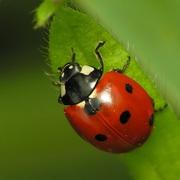 ladybug klein.jpg - Gratis Kartenlegen bei astro-check