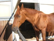 Verschenke eine Stute als Beistellpferd