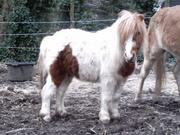 Liebes Pony abzugeben
