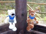 Teddy Holidays - Urlaub für Teddys
