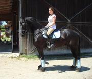 horse.jpg - 9jähriger Friesenwallach Schmusebacke! für Anfäng