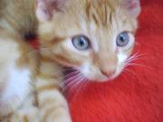Süße Katzenkinder suchen ein zu Hause