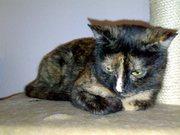 Suchen dringend liebevolles zu Hause für Katzenpaar