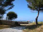 vista pini piccola.JPG - Ferienwohnung in Calabrien