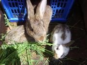 hasen/kaninchen