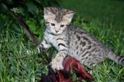 66666666666666.JPG - Hauskatzen - Kitty und Molly