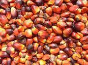 aa.jpg - Rohes und raffiniertes: Palmöl, Sonnenblumenöl, So