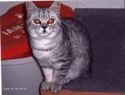 BKH Katze