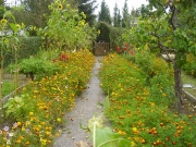 Garten 002.jpg